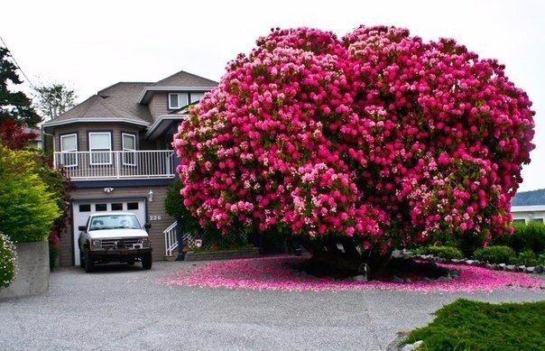 10 самых великолепных деревьев в этом мире Есть много причин полюбить деревья: они превращают углекислый газ в кислород, которым мы дышим, создают приятную тенистую прохладу в жаркий день,