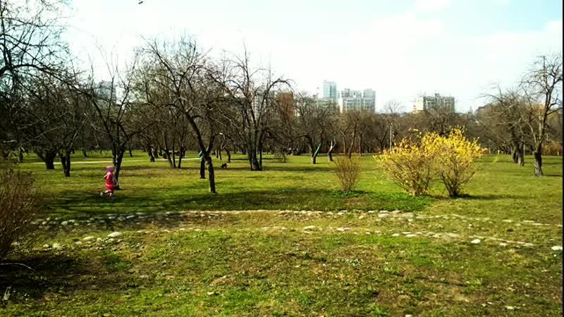 в яблоневом саду парка Ангарские пруды
