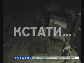 Хозяйский дом превратился в концлагерь для десятка собак в Володарском районе