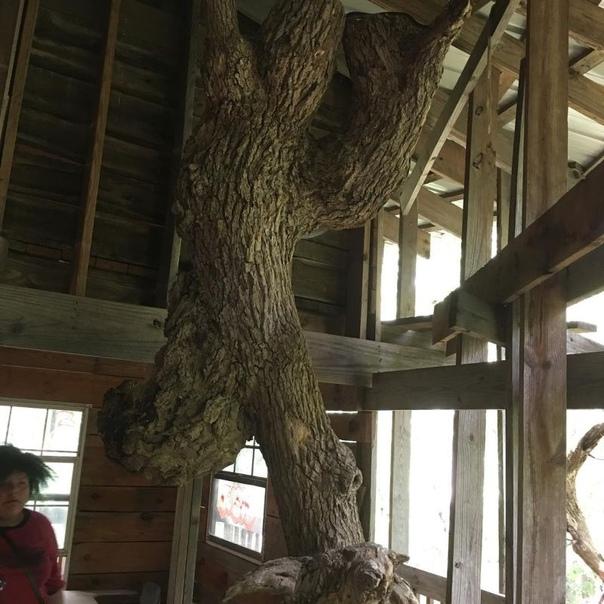Священник построил 10-этажный дом на дереве с 80 комнатами В 1993 году священник Горацио Берджесс начал