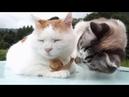 Дзен-кот