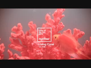 LIVING CORAL- 2019 PANTONE COLOR OF THE YEAR