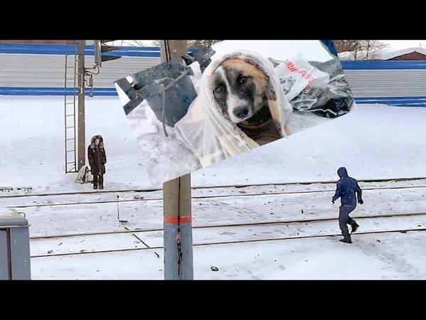 Сбитый поездом щенок двое суток на морозе ждал помощи