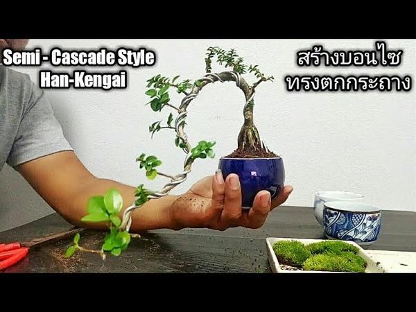 วิธีปลูกบอนไซ ทำบอนไซทรงตกกระถาง (Semi-Cascade Style)