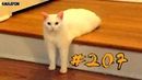 Смешные кошки и котики 2018 приколы про котов до слез под музыку – Смешные коты 2018 – Funny Cats