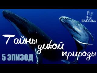 [ep.5] тайны дикой природы/ secrets of wildlife [рус.саб]