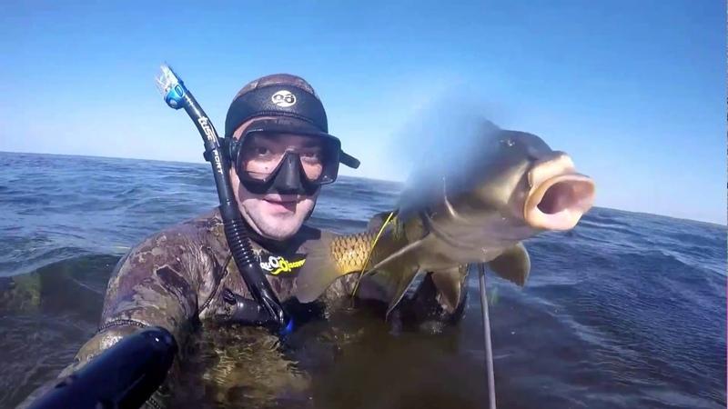 Зачётный сазан на подводной охоте около 6 кг отличный трофей подводного охотника