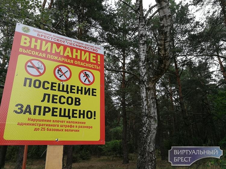 После целой недели холода и дождей разрешили посещение лесов в Брестском районе