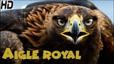 Aigle Royal Documentaire Animaux Sauvages HD