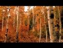 Когда осень Красиво правда Шелест и запах пряных листьев