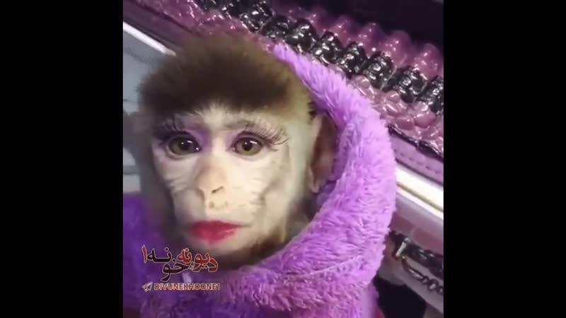 Прикольная подборка видео с обезьянками. LOVELY MONKEYS