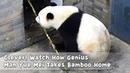 Clever! Watch How Genius Man Yue Mei Takes Bamboo Home | iPanda