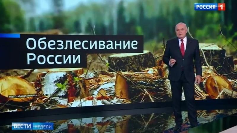 Лесная мафия преступно УНИЧТОЖАЕТ российские леса