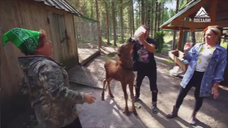 Мастер класс Как кормить лосят Лосеферма в Троицко-Печорском районе ( Республика Коми )