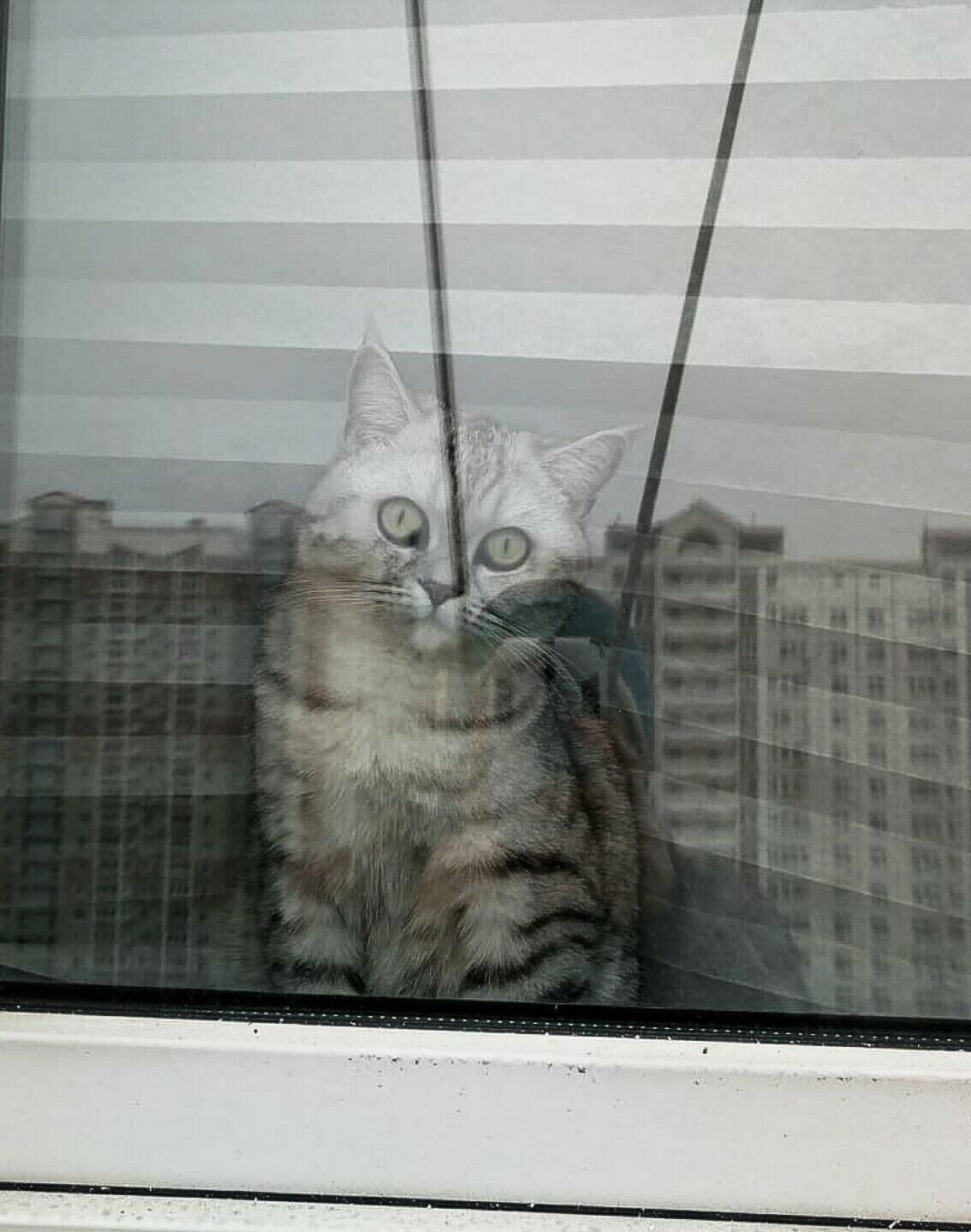 Работа такая, котов удивлять