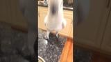 Animalsdt white bird refuses broccoli