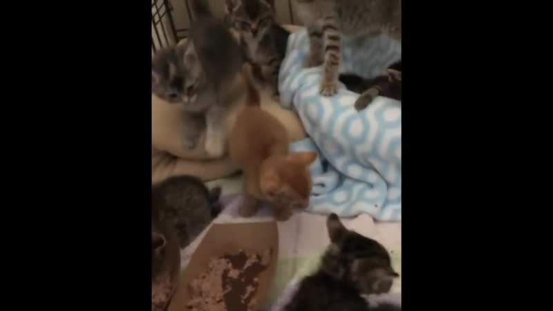 Couple rescue Kitten and reunite her with her 8 kitty friends