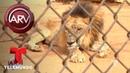 Animales de Zoo de Venezuela se mueren de hambre | Al Rojo Vivo | Telemundo