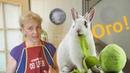 От чего у кролика такая бешеная потенция?.. Вы будете шокированы этим рецептом!