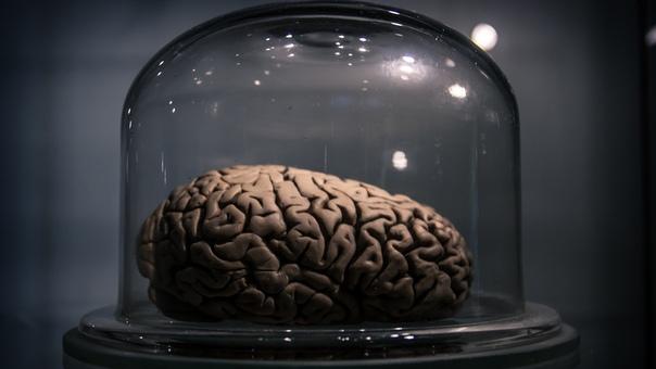 Около 60% массы нашего мозга составляет жир. Это самый жирный человеческий орган.