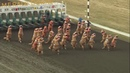 VIDEO Dinosaurs take the track in viral T Rex races