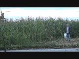 Это моя кукуруза