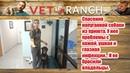 Спасение напуганной собаки из приюта Vet Ranch на русском Watch This Girl Blossom