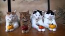 Я РЖАЛ ПОЛ ЧАСА. Смешные Коты и Собаки. ПРИКОЛЫ С ЖИВОТНЫМИ. Cute Cats 129