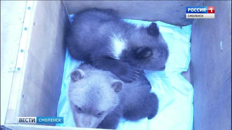 Торопецкий приют принял смоленских медвежат