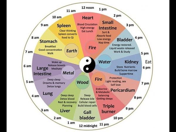 Биологические Часы: Малый Цикл и Цикл Большой. Вращение стрелок в противоположную сторону.