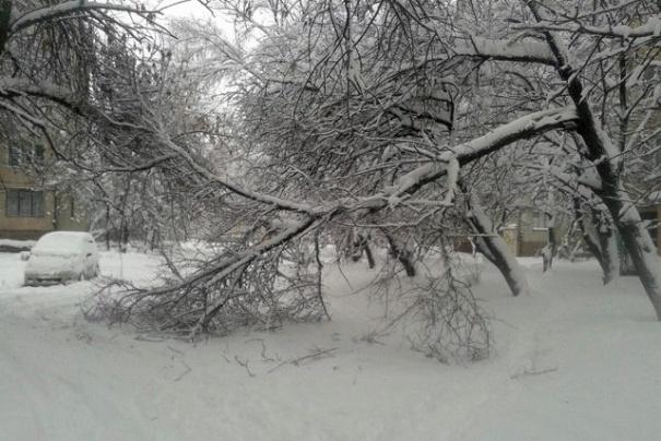 На Востоке Луганска повалило несколько деревьев из-за обильного снегопада