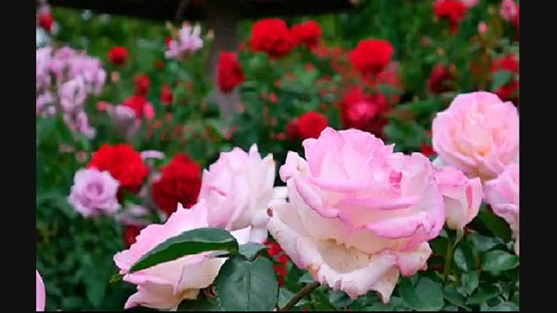 Чудесному мгновенью — не уйти, Прекрасному — не дать остановиться, Не потерять, а много раз найти, И много раз простить, а не