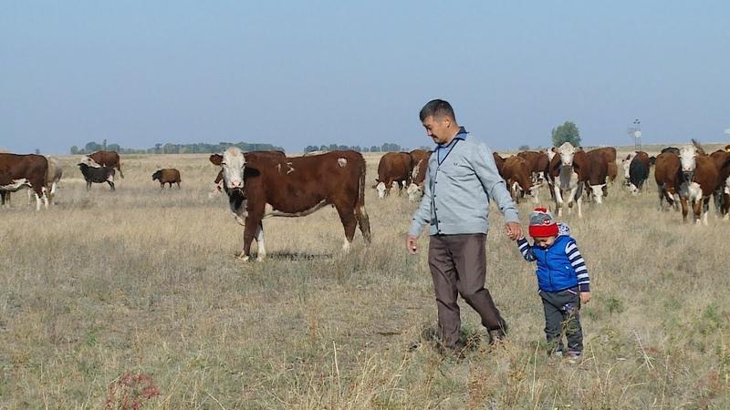 В Старополтавском районе развивают животноводство