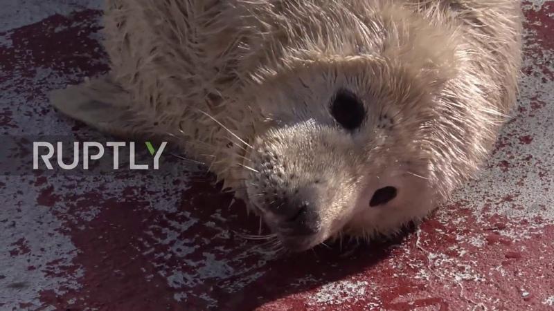 Three cute baby seal pups born at Kaliningrad Zoo
