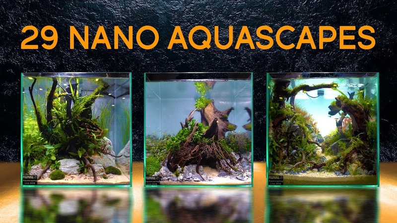 Twenty-Nine Of the Best Nano Aquascapes In America