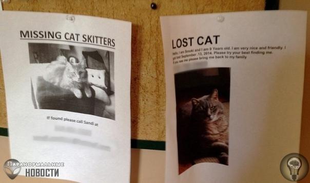 Загадочные массовые исчезновения домашних кошек и собак