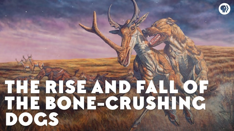 The Rise and Fall of the Bone Crushing Dogs