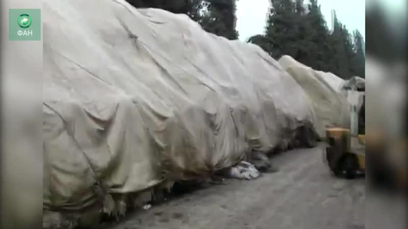 Сирия 16 тысяч тонн хлопка прибыло в провинцию Хама