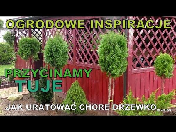 OGRODOWE INSPIRACJE (2) - Formowanie tui