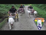 Adventures with Husky Dogs 3 Sacco Carts on NCR Trail