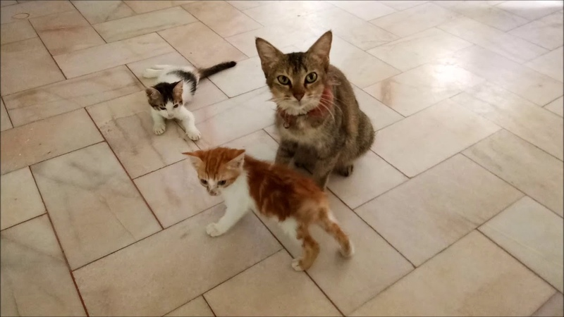 Pepble bites baby - Mama cat gets agitated and punished difference kitten