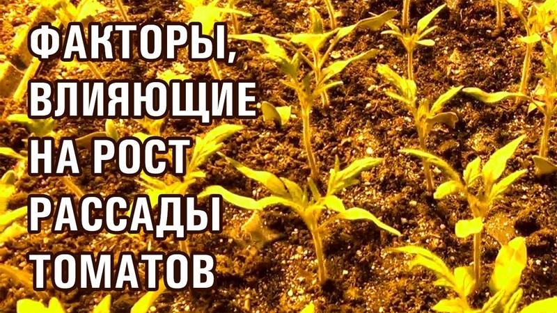 РАССАДА ПОМИДОР ФАКТОРЫ ВЛИЯЮЩИЕ НА РОСТ 30 11 2018