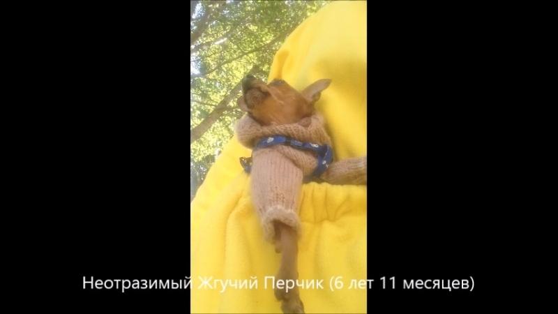 Неотразимый Жгучий Перчик в кармане толстовки