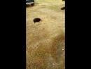 В поисках дома и любящих хозяев шесть замечательных щенков!