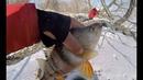ОПА ЕСТЬ ВОТ ЭТО ОКУНЯРЫ КЛЮЮТ В КОРЯГАХ! Рыбалка на Оби ! Первый лед 2018-2019!