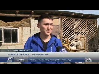 20-летний предприниматель выиграл международный грант на разведение коз в Алмати