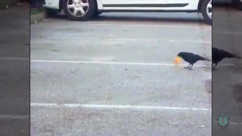 Умилительное видео о том как ворона накормила мышонка смотреть онлайн без регистрации
