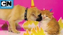 Gumball and Unikitty as real life kitties Cartoon Network
