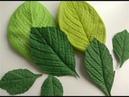 Как я делаю листья из фоамирана Обзор и применение молда для листьев