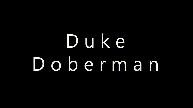 Duke Doberman